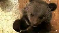 三只小熊*顺荐-电影熊的故事