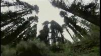 04-基础瑜伽 4(瑜伽境界)