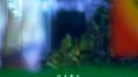 恶女阿楚-第28集