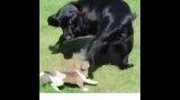 动物Vine搞笑短片合集 #5 【中文字幕】