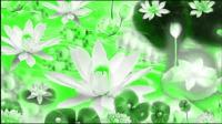 带你到比天堂美万倍的阿弥陀佛西方极乐世界观赏莲花池,莲花,感受八功德水神奇!