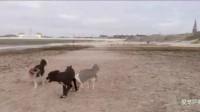 狗狗在主人的用心照顾下,生活得无比开心,好命啊!