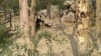 大熊猫04