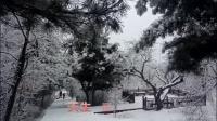 早春三月梨花开 美景自赏踏雪来
