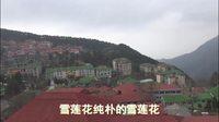 雪莲花-在黄山庐山追寻春的脚步