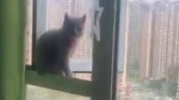 淘气的小猫