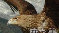 鹰之美【欣赏】