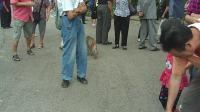 黔灵公园之猕猴观赏