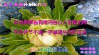 《5》雪莲花&楹联展播特别制作五