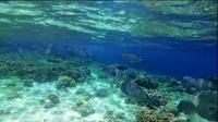 海陆空 - Sublue Mix 白鲨 水下推进器 精彩视频-An Amazing Adventure