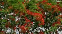 zhanghongaaa摄像 原汁原味的鸟语花香 原创