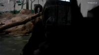 再也没有博罗曼啦上海动物园半年作品