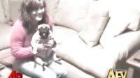 美国家庭搞笑录像-动物特辑