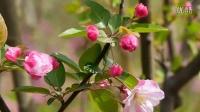 高岭北方园林春暖花开