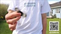指尖陀螺花式玩法集合1