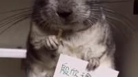 永远在一起*取自童童,回向小老鼠*顺推荐-熊猫的故事
