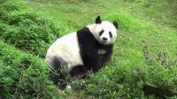 熊 猫 乐 园