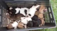窃宫系列特殊小组 25 好几只等待收养的小狗狗