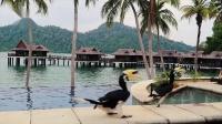 马来西亚的马尔地夫:绿中海渡假村(Pangkor Laut Resort)