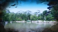 再唱洪湖水-海连观赏家乡荷塘剪影
