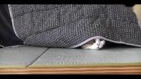 爆笑宠物 萌得让你颤抖的猫咪_高清