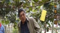 猕猴桃种植时选地的注意事项与日常管理建议以及溃疡病等病害的防治措施讲解(贵州)