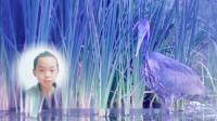 水边的呆鸟配乐朗读-关于苍鹭的儿童故事视频