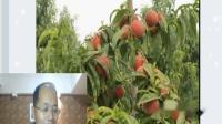 果农乐第八期苹果常见病害及防治方案与桃主干行快速成行技术