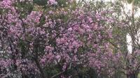 在那桃花盛开的村庄