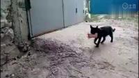 窃宫系列特殊小组 53 流浪猫的母爱