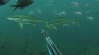 新西兰渔猎自由潜水
