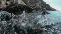 北加州岸潜渔猎自由潜水