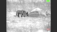 国外农场猎杀群狼