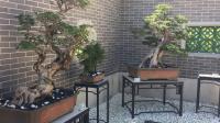 北京世界园艺博览会盆景花卉展 - 2019.9.29