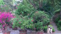 放逐心情的旅途   冬、夏季节厦门万石植物园观景