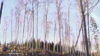 Осенний вальс - Вадим Южный