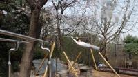 玄武家族1疯外练-第三十八期(2020年3月31日训练视频)单杠腾身