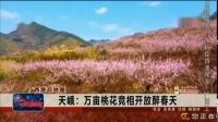 【广西赏花地图】天峨:万亩桃花竞相开放醉春天