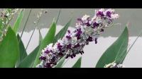 02 谁是知音人 张小英(2).mp4