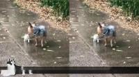 感人视频❤家狗把小流浪猫带回家