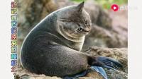 当动物换上猫咪脸会变成什么样?(2)