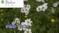 太感人!王琪的《送亲》台湾省网友也在听