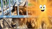 青岛动物园~特效制作《糖糖 - 魔性小孩 》(248)