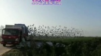 陕西新天鹰春棚10公里训放视频