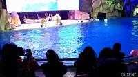 重庆野生动物世界之海豚表演