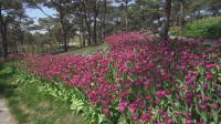大连英歌石植物园 (2021.4.18)