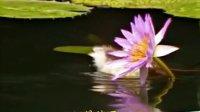 向日葵 语音冥想曲 蕙兰瑜伽