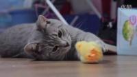 Hay&Pet - 当猫咪遇上小鸡