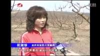 延边华龙集团新推苹果梨认养方式