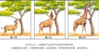 (超清)7.1现代生物进化理论(2):达尔文的进化论(人教版高中生物必修2)-于迪